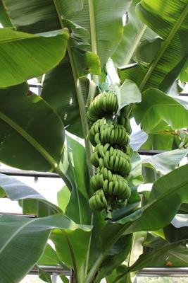 バナナワニ園4.JPG